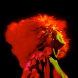 Led Zeppelin: Live Dreams - A Photographers Vis...