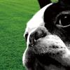 Dog Training Sound Se...