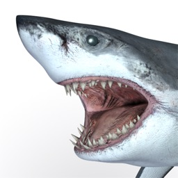 Talking Great White : My Pet Shark PRO