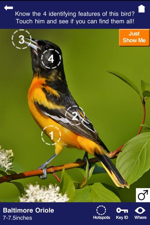 Wild About Birds!