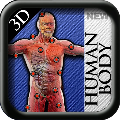 3D New Human Body icon