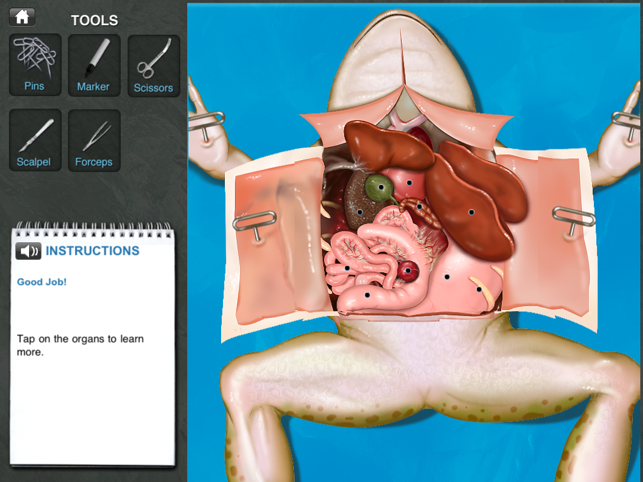 Frog Dissection on the App Store – Frog Dissection Worksheet Answers
