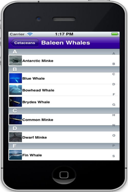 Cetaceans screenshot-1