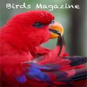 Birds Magazine