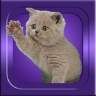 Guess It - Cat Breeds icon
