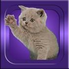 それを推測する - 猫の品種 icon