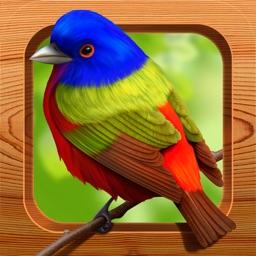 Bird Matching