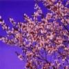 花見ガイド