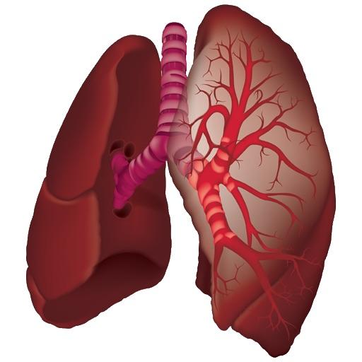 Pulmonary Auscultation
