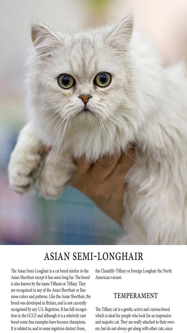 Cats Magazineのおすすめ画像4