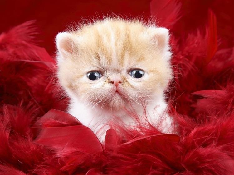 Cute Kitty Wallpaper screenshot-4