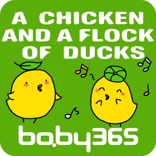 A chicken and a group of ducks-baby365