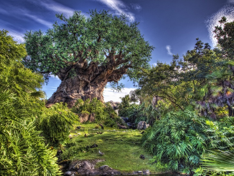 Animal Kingdom Wallpapers from Disney Photography Blog screenshot-0