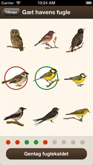 danske fugle oversigt