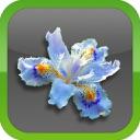 Flowers~ [send lovely roses, sunflowers, tulips]
