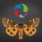 Papillons de nuit : Plus grands que nature icon