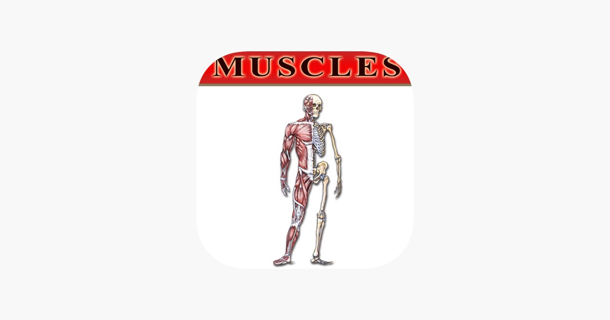 Bryan Edwards Muscles Flash Cards On The App Store
