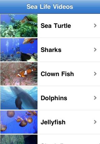 Sea Life Videos - Ocean & Marine Creatures