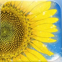 Hima chan/ A story of a sunflower in Kadonowaki