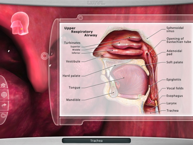 Upper Respiratory Virtual Lab On The App Store