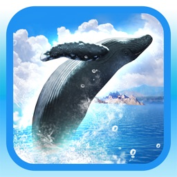 REAL WHALES  Find the cetacean!