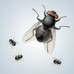 Annoying Fly HD