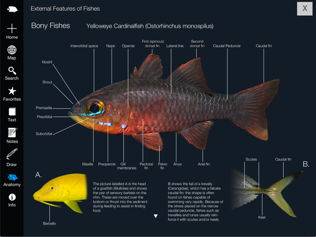 Reef Fishes of the East Indies (Vol. 2) on the App Store