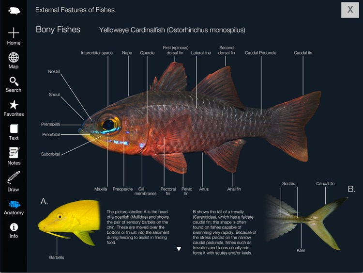 Reef Fishes of the East Indies (Vol. 2) screenshot-4