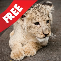 Free Kids Puzzle Teach me Zoo: Learn about funny zoo animals like the lion, the tiger and the monkey