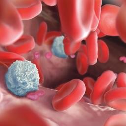 Miniatlas Hematology