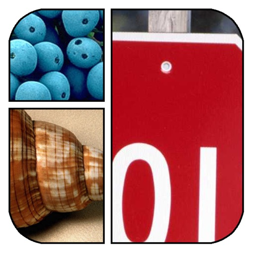 Zoomed - Close Up Photos Quiz Game