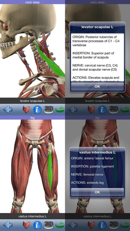 Visual Muscles 3D screenshot-3