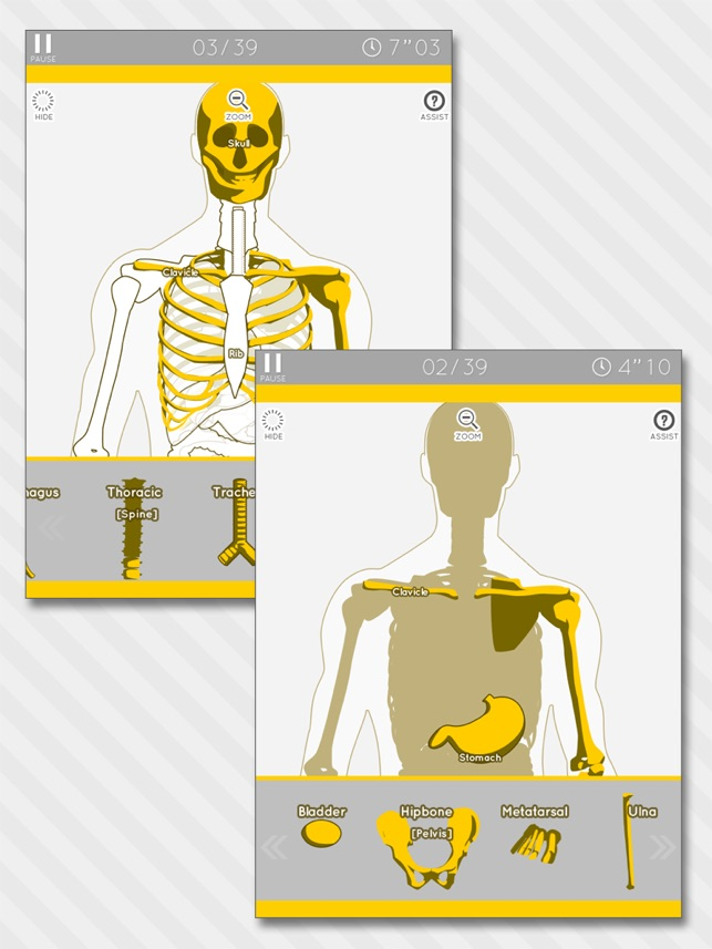 Enjoy Learning Anatomy Model Puzzle On The App Store