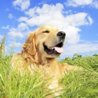 Dog Training Resources,Articles,Gallery,Videos,Guides and Advice icon