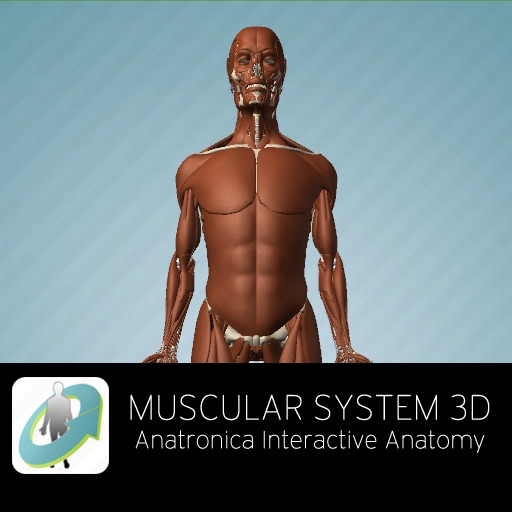 Muscular System 3d Anatronica Interactive Anatomy By Goodwill