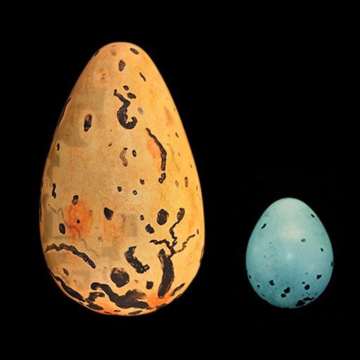 Bird Egg Identification Guide