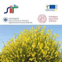 Guida alle piante legnose dei Colli Euganei
