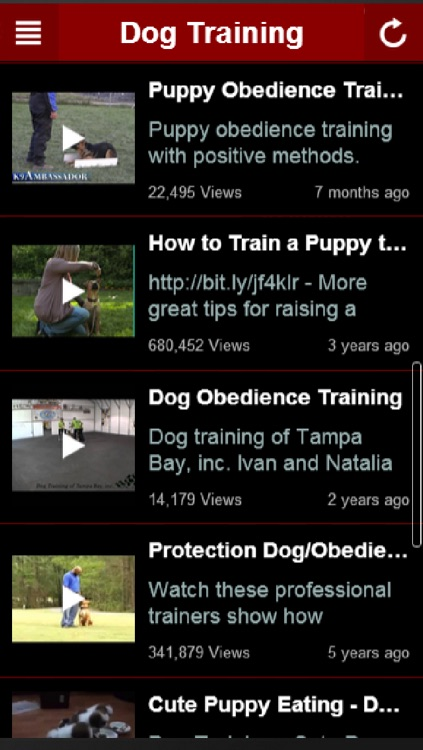 How To Train Dog: Learn How To Train a Dog The Right Way Yourself At Home