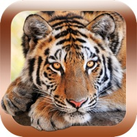 Codes for Animal Sounds & Pictures Zoo - learning game for kids, toddlers and babies Hack