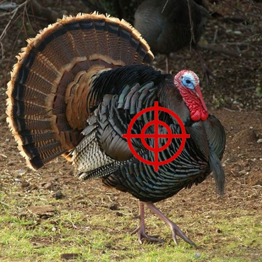 Turkey Hunter 2015