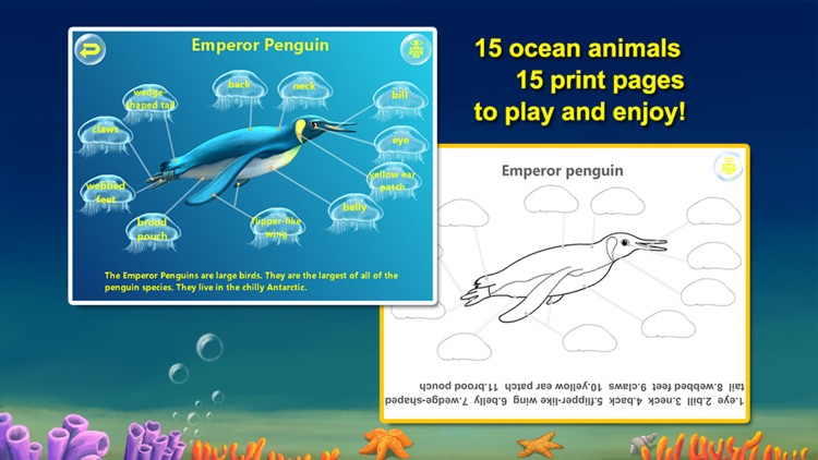 Amazing Ocean Animals- Educational Learning Apps for Kids screenshot-2