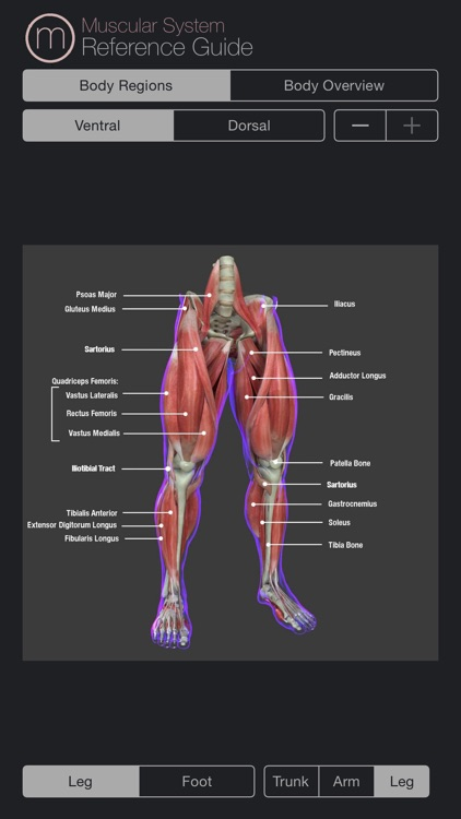 Muscular System Reference Guide screenshot-3
