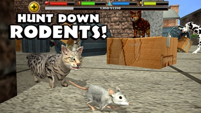Stray Cat Simulator screenshot three
