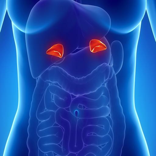 Human Biology : Endocrine System Quiz
