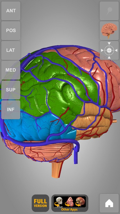 Brain - 3D Atlas of Anatomy Lite screenshot-4