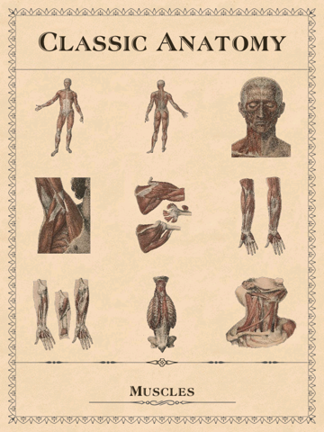 Classic Anatomy screenshot