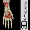 Hand & Wrist Pro III with Animations - 3D4Medical.com, LLC