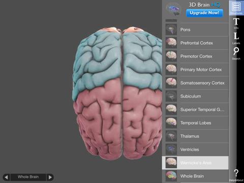 3D Brain Screenshot 2