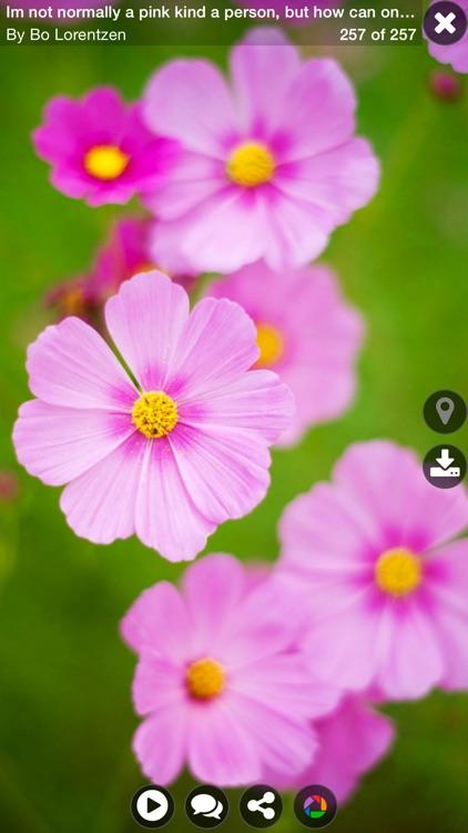 Explorer for Picasa Photo Albums Pro