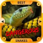 Die besten gefährliche Schlangen icon